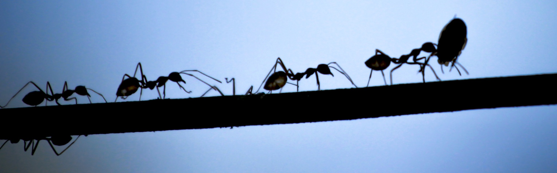 Collective efficiency: Mobility researchers can learn from ants