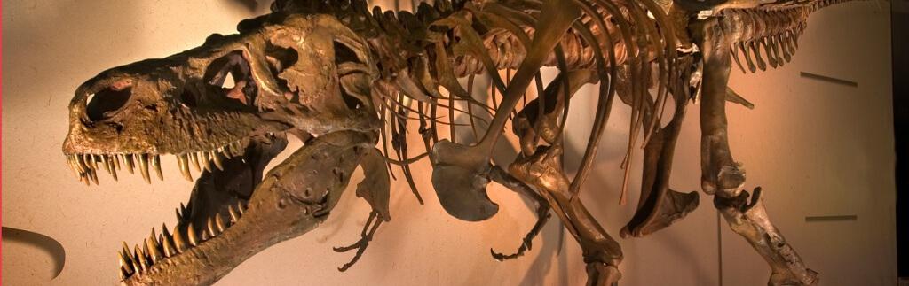 Wenn Dinosaurier reisen: DB Schenker transportiert T. Rex nach Kalifornien