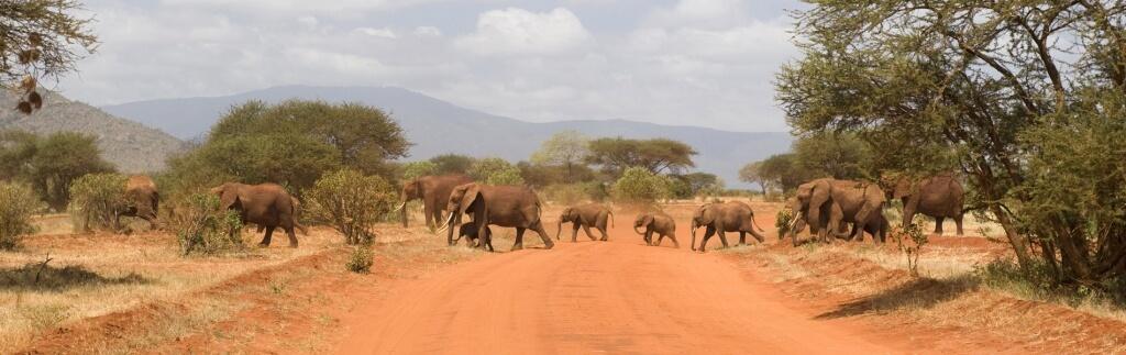 Platooning im Landverkehr: sicherer, wirtschaftlicher, nachhaltiger